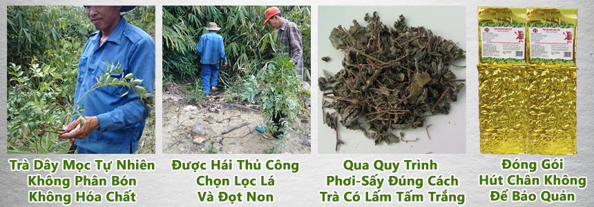Thu Hai Cay Tra Day Rung