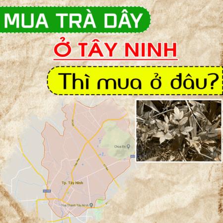 Dai Ly Phan Phoi Tra Tai Tay Ninh