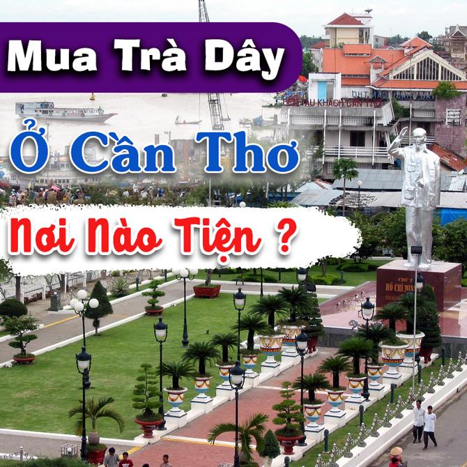Mua Tra Day O Can Tho