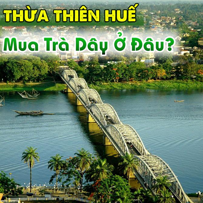 Mua Tra Day O Thua Thien Hue