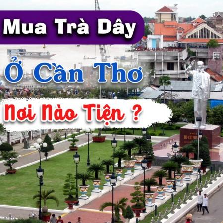 Tim Cua Hang Mua Tra Day O Can Tho