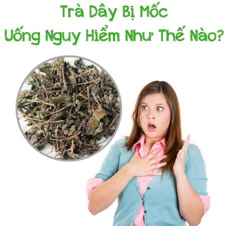 Tra Day Bi Moc Uong Co Sao Khong