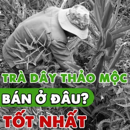 Tra Day Thao Moc Ban O Dau