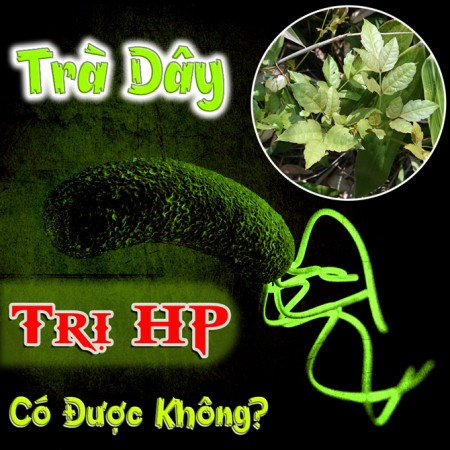 Tra Day Tri Hp Co Duoc Khong